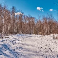 Экотропа в лесу